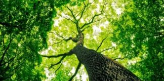 20 000 дървета убийци дебнат из цялата страна