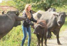 25-годишна рокерка – студентка от Велико Търново сама отглежда стадо биволи