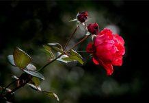 Евтим Евтимов: 10 вечни цитата за живота, жените и любовта