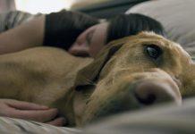 Уникално! Родителите искали да изоставят кучето си, вижте какво направи то с детето им!