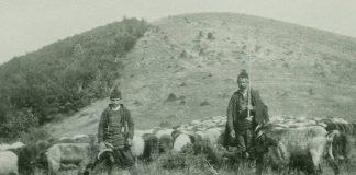 В родопското село на кехаите овцете били над 18 000