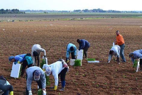 Хиляди българи работят при нечовешки условия в Италия