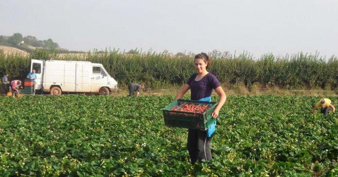 Българите в чужбина често са жертва на трудова експлоатация